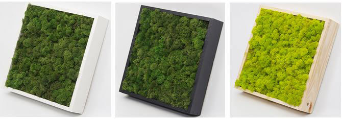 Moss frames come in different sizes and colours