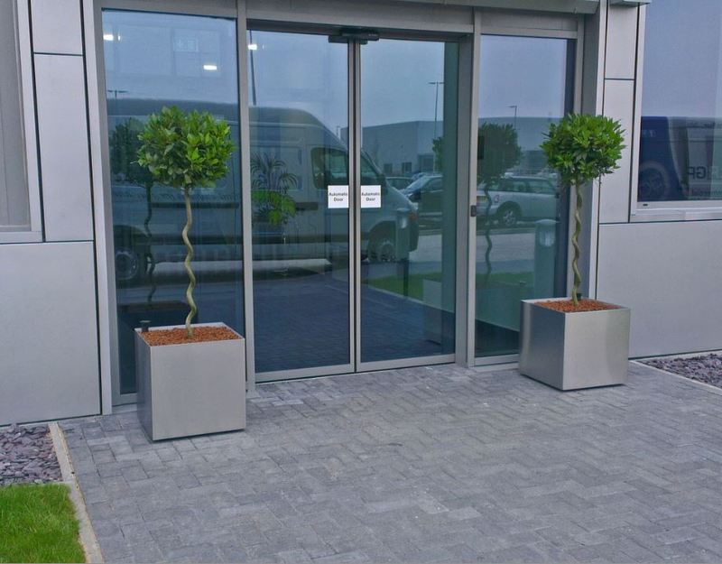 Spiral stemmed Bay Trees in Superline Stainless Steel Containers