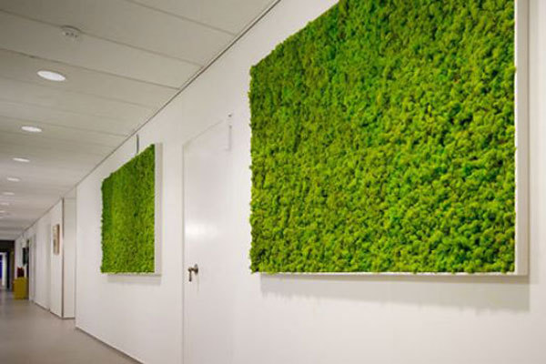 Moss Pictures make excellent decoration for modern minamalistic offices