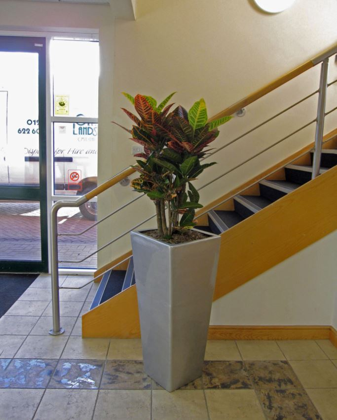 A colourful Croton Petra Plant Display brigtens up this Nuneaton office Reception