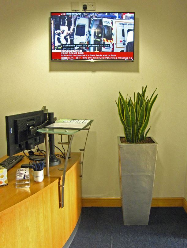 Colurful & Compact Sansiveia Plant Displays decorates an empty corner by the main office Reception CV10 7RJ