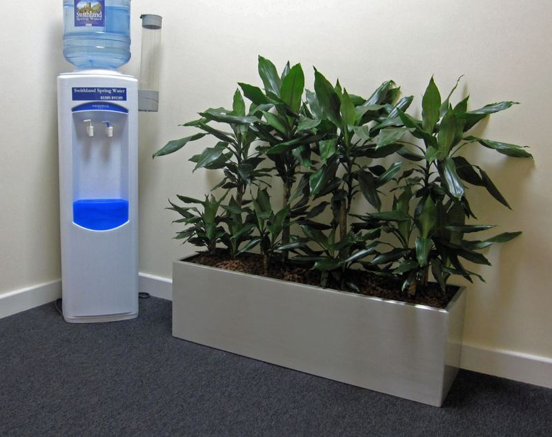 Office Breakout area is made more relaxing with a rectangular plant display with Dracaena Studneri