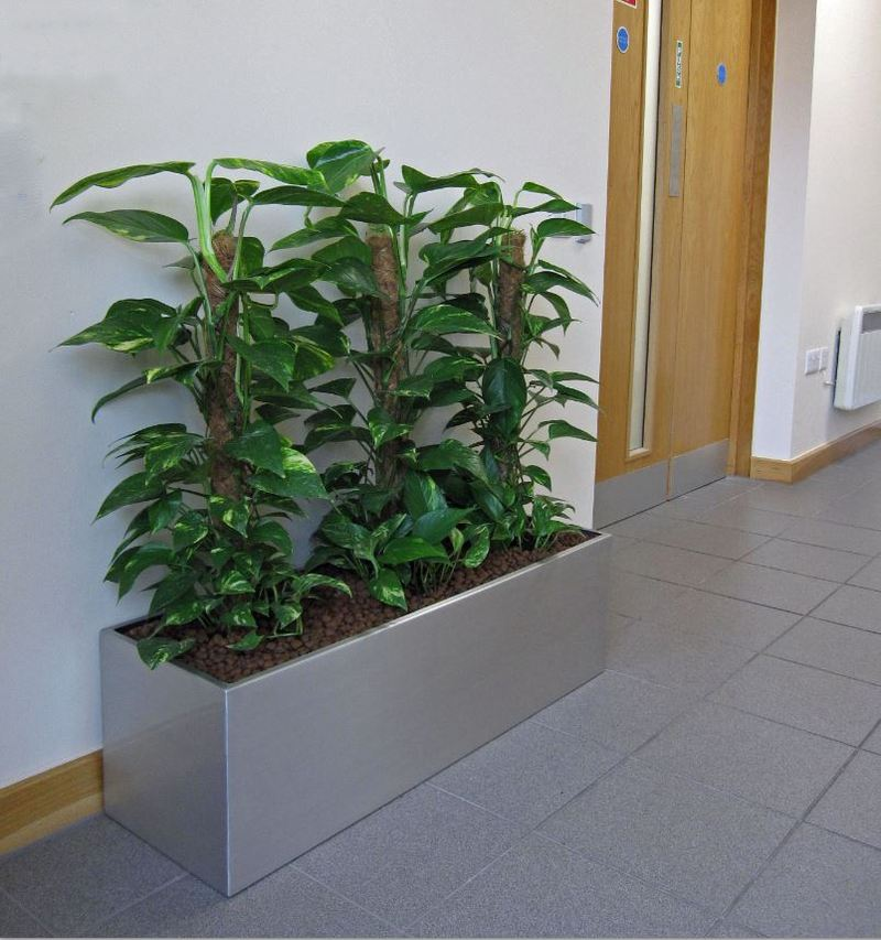 This slimline green plant display looks great in the corridor to the ground floor offices