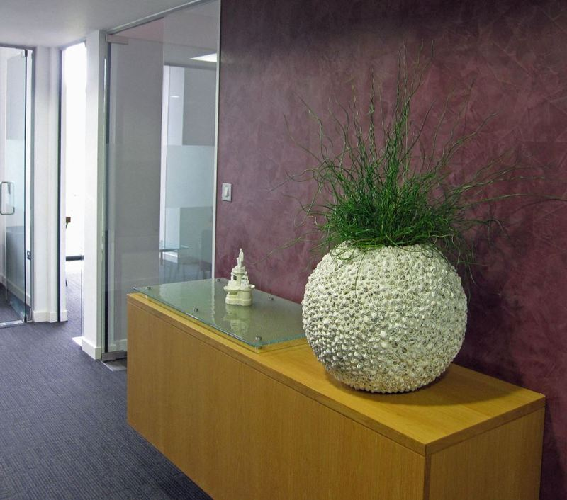 Beach Planters planted with Corkscrew Rush against a purple wall in an office corridor