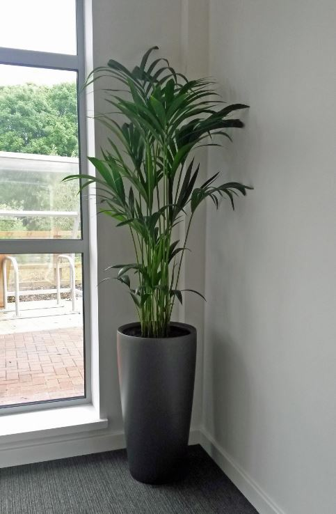 Charcoal Grey circular Palm Plant Display in the corner of this Worcester office Meeting Room