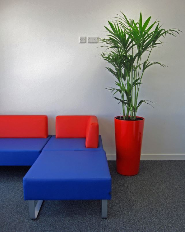 Office Breakout area with a Striking Red Plant Display next to funky modern seating