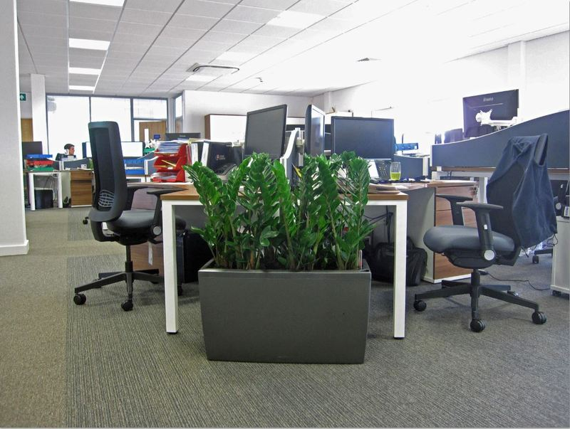 Rectangular planter with Zamiifolia living tropical plants located on the end of an office desk