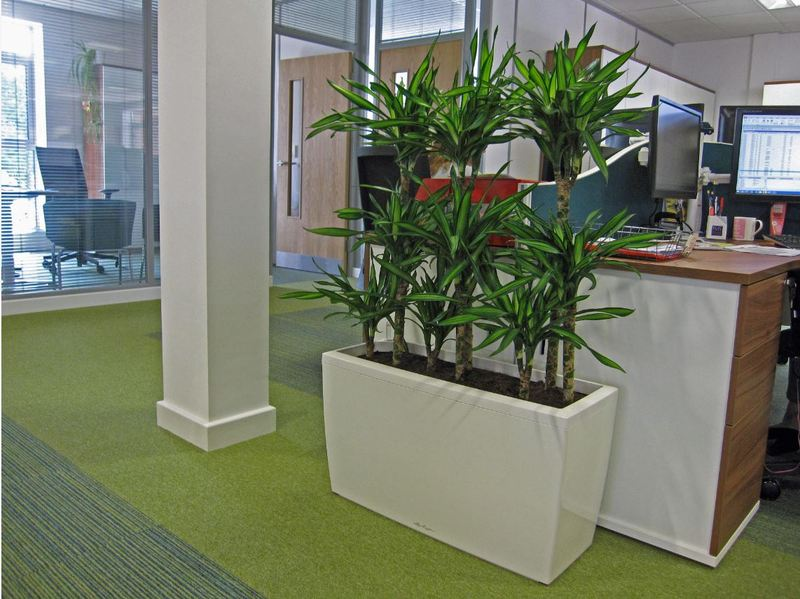 Rectangular Plant Display used as a green office screen on the 1st floor of these Worcester offices
