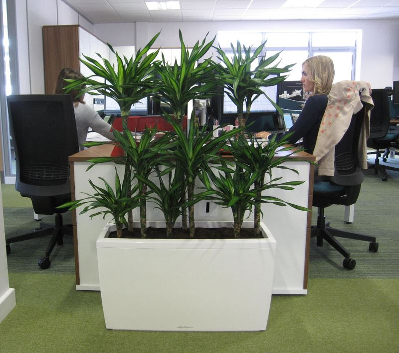 Greener offices are more productive