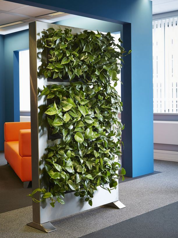 Green Office Plant Screen