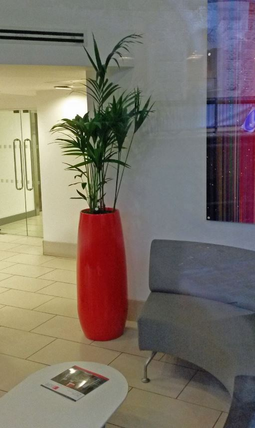 Retro Modern Ying Plant Display stands in this Derby office Reception next to a Settee