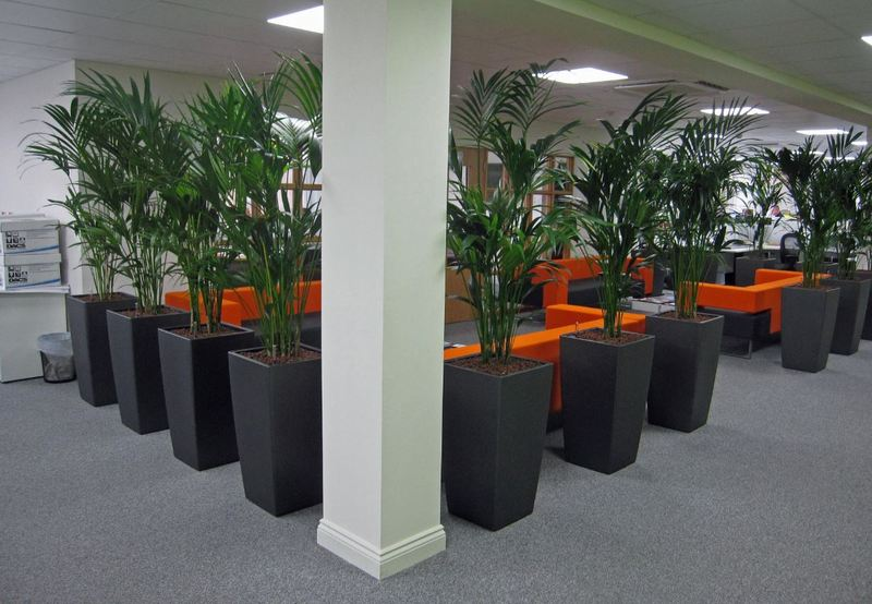 Commercial Engineers in Derby DE1 use plants to make their offices more productive