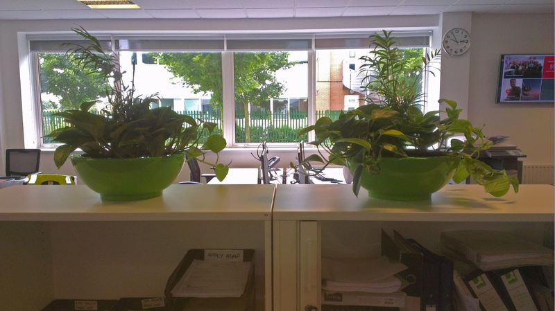 Desk top plant displays for office cabinets on Nottingham Business Park NG8