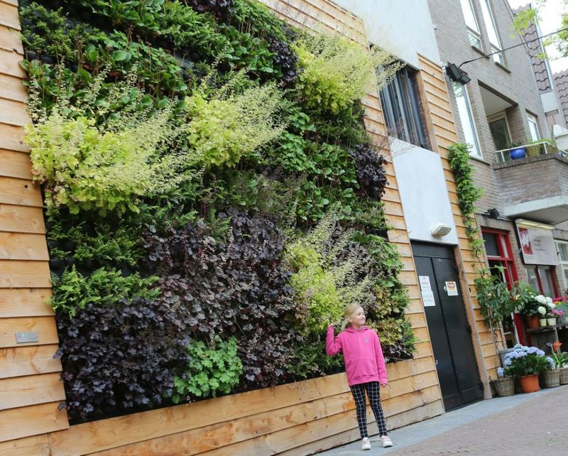 Green walls are making our cities healthy & gorgeous