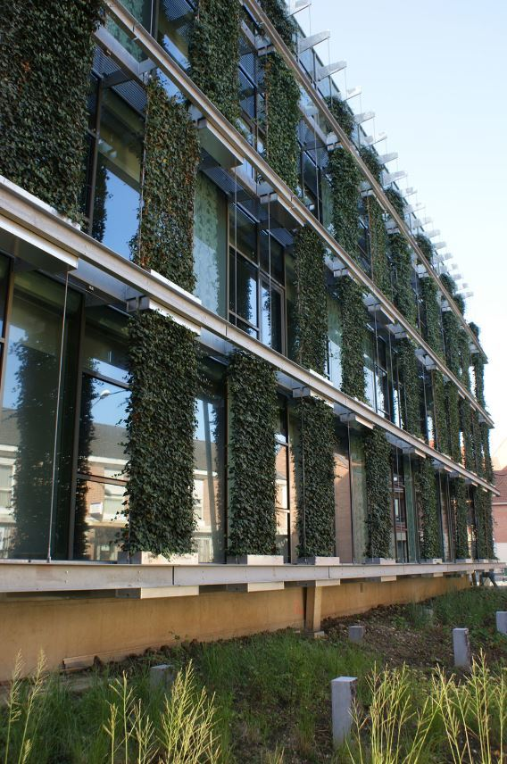 Green Walls are making cities Greener & Healthier