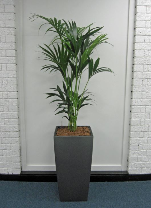 Green Plants for West Bromwich offices B71 4LF