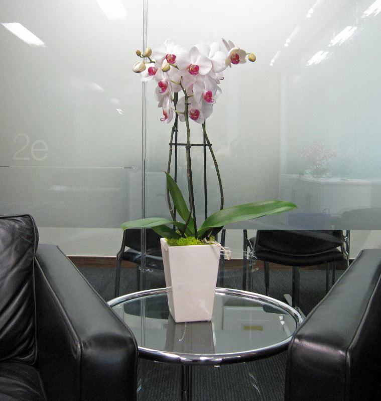 Artificial Orchid table top display for the main Reception