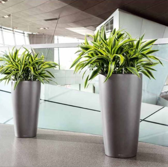 Live Plant Containers Services Office Landscapes