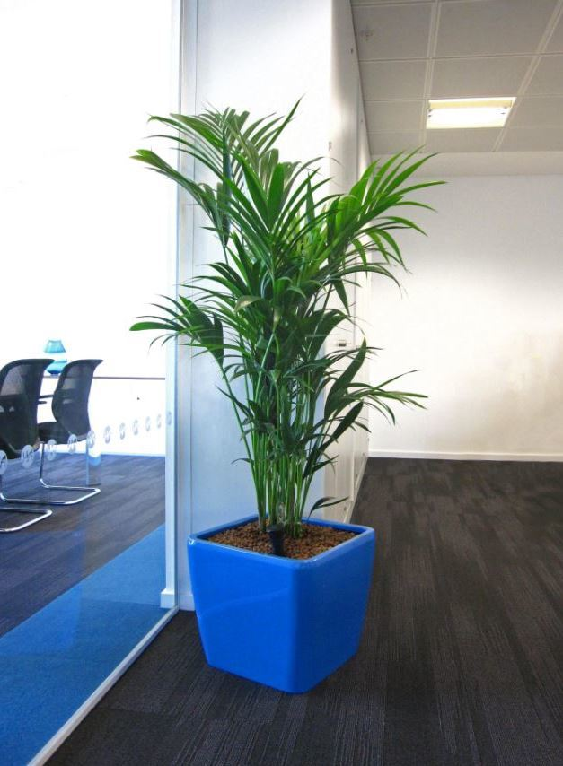 c3 The open plan offices of a Midlands Investments company has a light Blue low square plant display