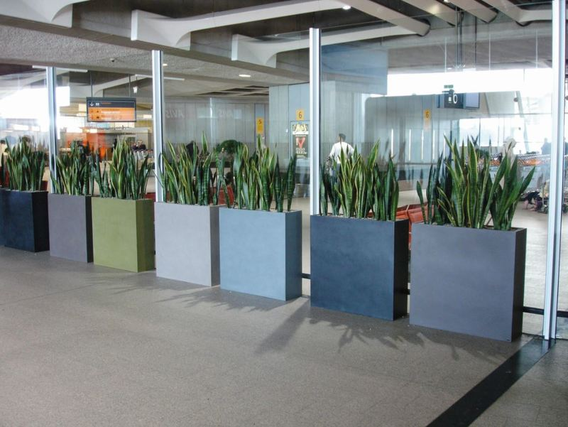 Different coloured Barrier plant Displays add green style to this glass window in Derby