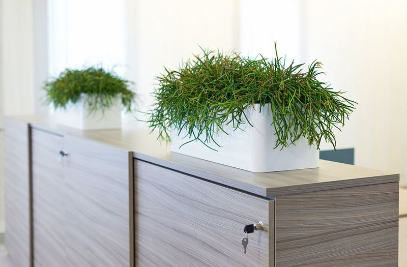 Rectangular displays with Euphorbia plants decorate filing cabinets in this Leicester office