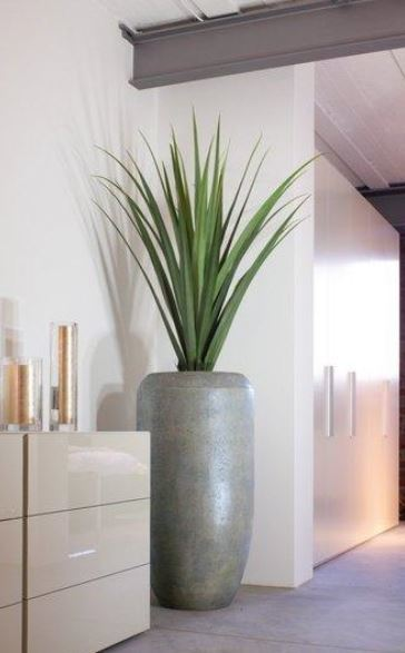 Concrete Cigar Planter with a spiky Yucca plant in the corridor of this Cheltenham office