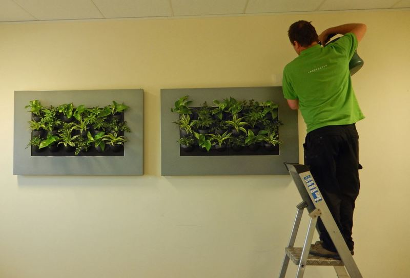 1 mini Green Walls, Live Pictures, Living Pictures for offices & Restaurants