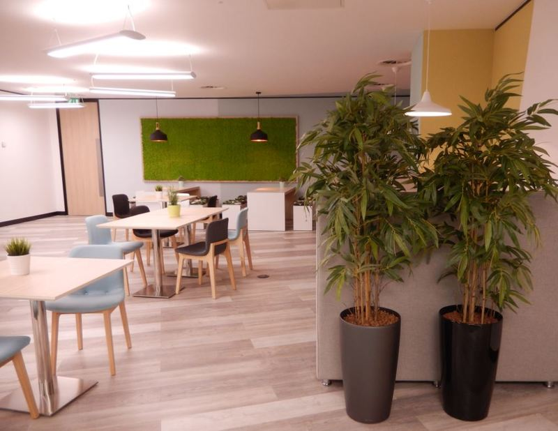 Moss wall & artificial bamboo plants in this Milton Keynes  serviced office reception