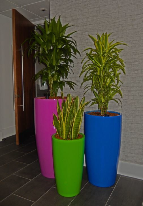Bold Bright Plant Display used in this Milton Keynes office Reception