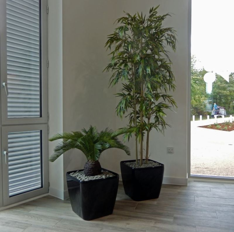 Artificial Bamboo Tree & Cycad Palm Plant in the Common Room of this Student Apartment accommodation