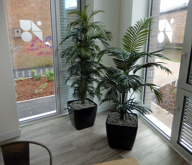 Artificial Palm Plants in the corner of this office Breakout area