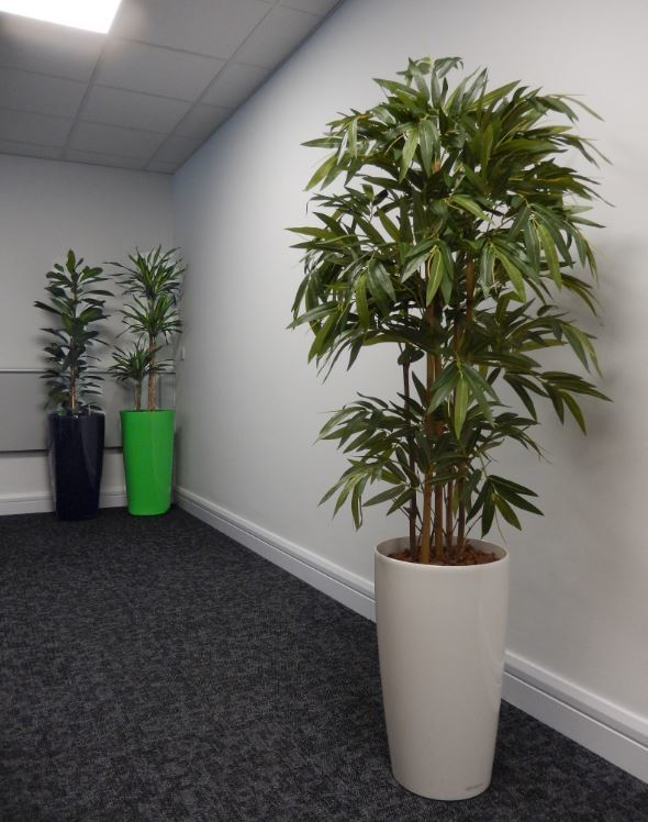 Very realistic Artificial Bamboo tree planted into a tall circular white Rondo container