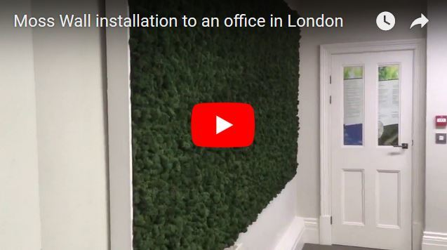 Video of a Moss Wall installation to office in London