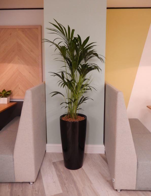 Plants for the communal areas of these serviced offices in Nottingham