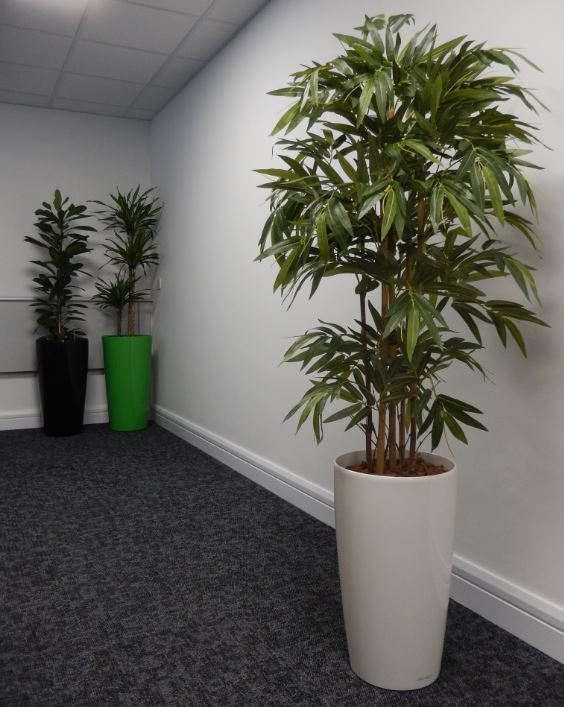 Artificial Bamboo tree in a white container ideal for office meeting rooms & low light areas