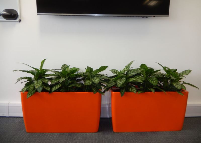 Bright orange floor standing plant displays under a plasma TV, improve the health of this office