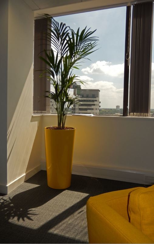 Bright Yellow Container and a leafy green Palm plant make this Derby office a nicer place to work