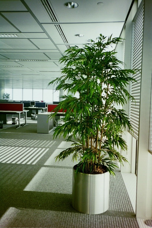 Plants inside HSBC Canary Wharf offices