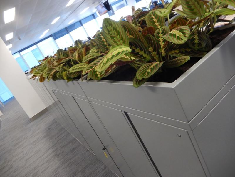 Cabinet top plants in open plan Coventry offices