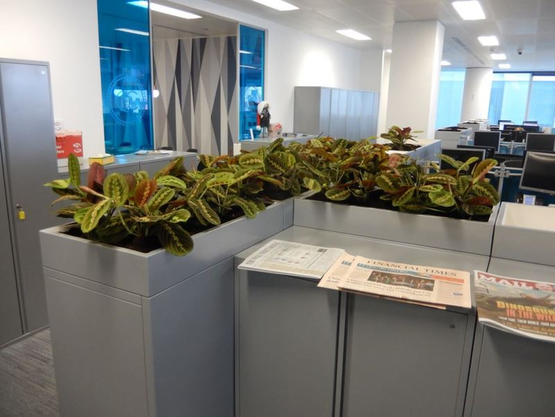 Filing cabinet top plants for Coventry HQ offices