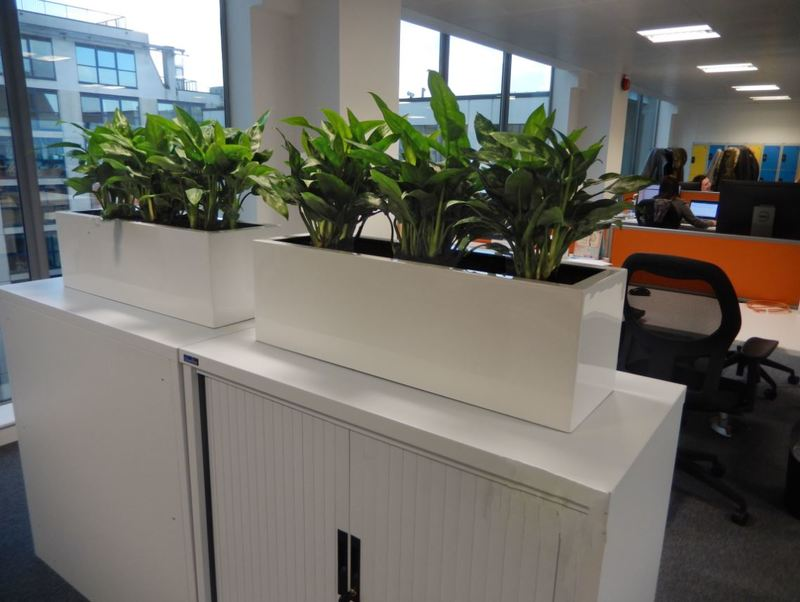 Cabinet top plant displays for Solhull office