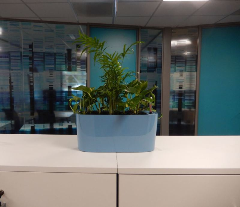 Cabinet & windowsill plant displays for Coventry Finance offices