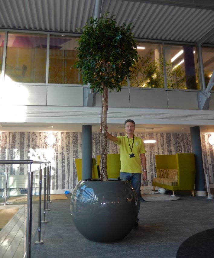 Circular Atlas display with Ficus Plants for derby office