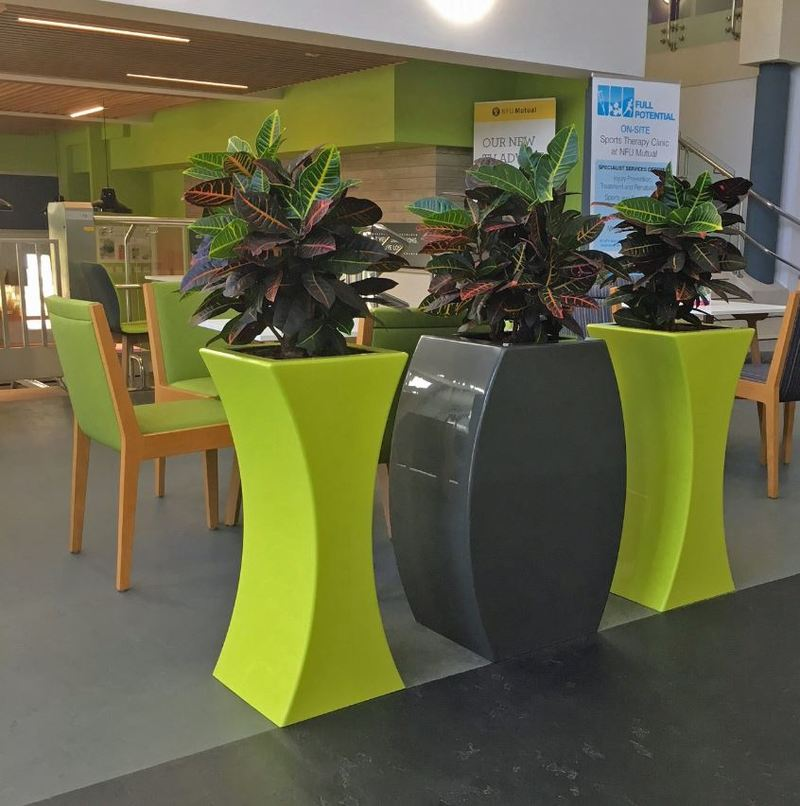 Curvy Sophia & Ursula Plant displays line an office  walkway