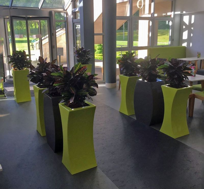 Colour cordinated Grey & Lime green plant displays