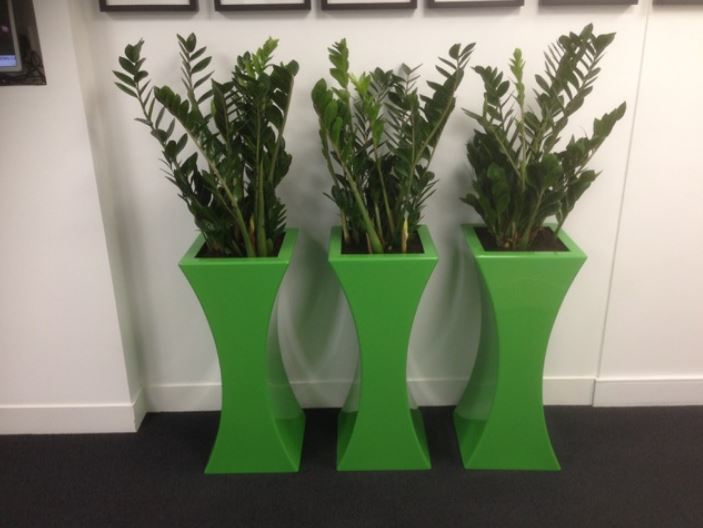 Curvy Sophia Plant Displays for office Meeting Room in Derby DE1