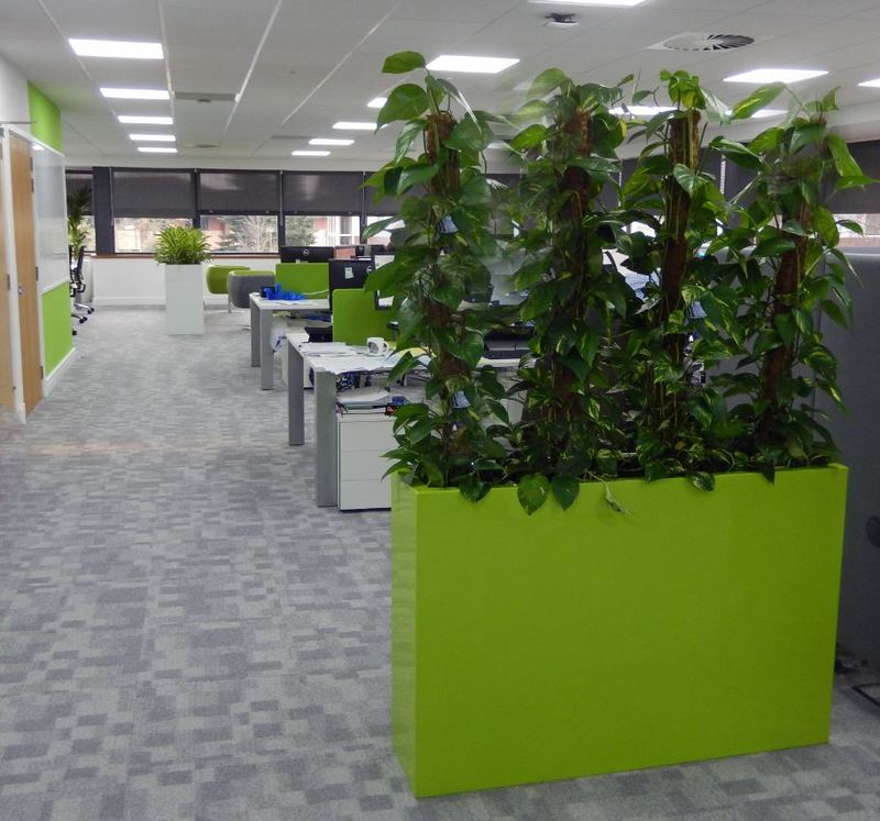 Tall Rectangular Barrier Plant Display create a healthy green office divider