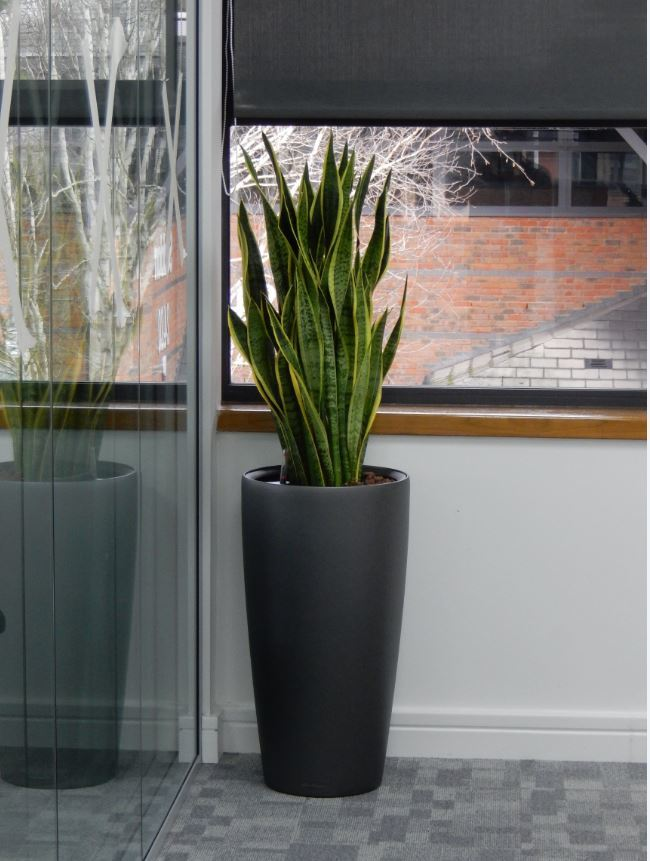 This tall and elegant Plant display adds warmth to a corridor in this Derby office