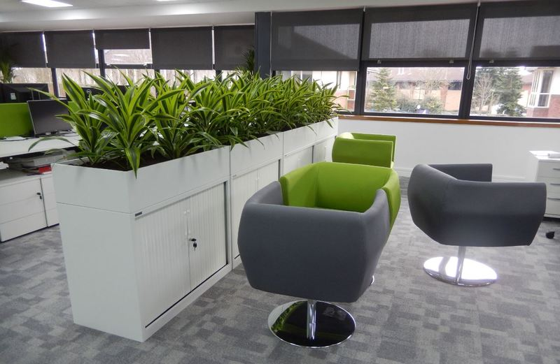 Gorgeous, colourful Dracaena Lemon Lime plants create a green screen for these Derby offices