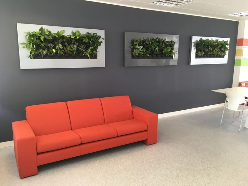 Wall mounted interior landsaping for this Nottingham office breakout area